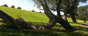 systemische Geschichte Baum